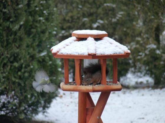 Eichhörnchen im Vogelhäuschen