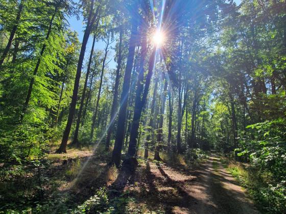 Märchenwald, der Strahlenkranz