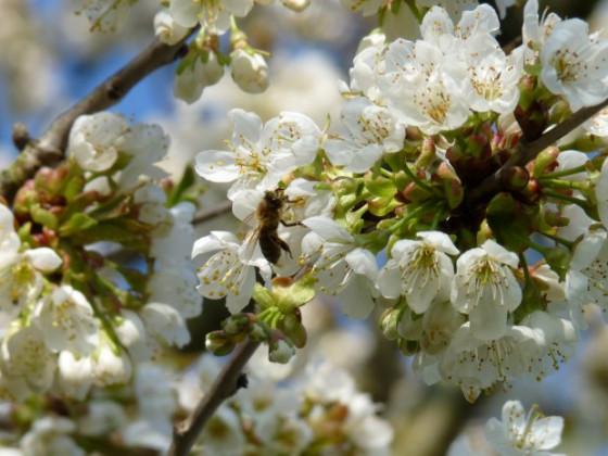 Frühling 2.jpg