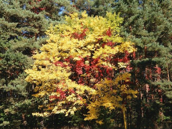 Farbenpracht im Herbst