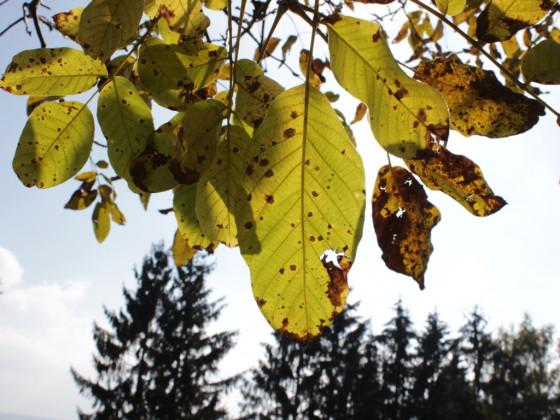 Herbstblätter im Sonnenlicht