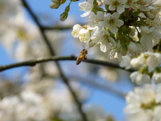Frühling 7.jpg